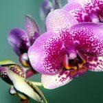 Terapija cvijećem