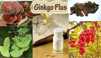 Ginko plus – hrana za mozak